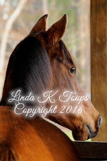 2016-03-05 Robin & Roxanne - Alabama Horse Fair