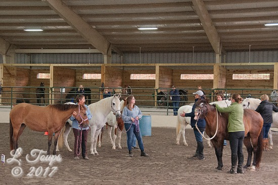 2017 Oct 28 & 29 - GPFHA Working Equitation Clinic